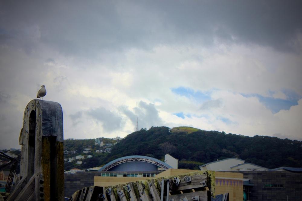 Wellington 011