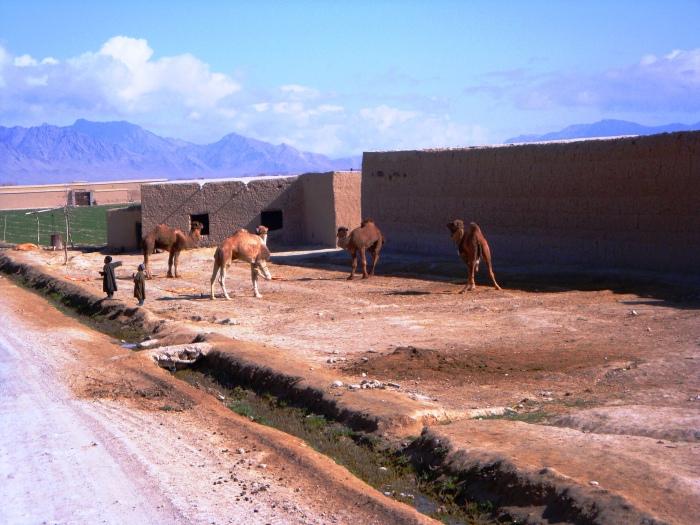Afghan 009